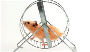 image from https://missinginthemission.com/2016/05/22/hamster-on-a-wheel/